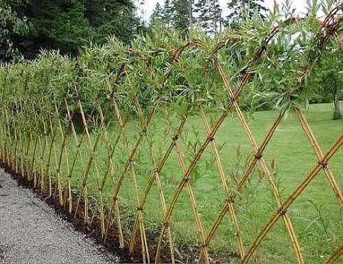 Сплетя забор из ивы, можете получить живую изгородь