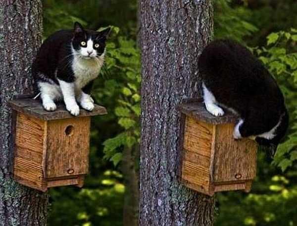 Сделайте выступ крыши больше, чтобы кот не мог лапой дотянуться до птенцов