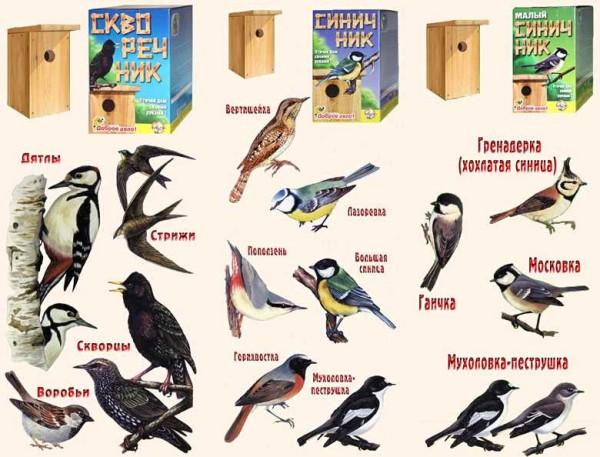Какие птицы селятся к каких скворечниках