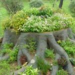 Мощные корни покрашены, между ними тоже насыпан грунт и высажены растения