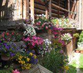 Обилие цветов украсит любой ландшафт или дом
