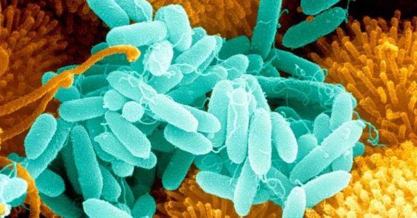 Бактериям надо создавать оптимальные условия для жизнедеятельности