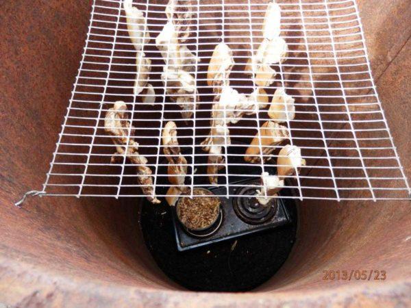 В верхней части бочки сверлим отверстия, в них вставляем прутья решетки с подвешенными продуктами