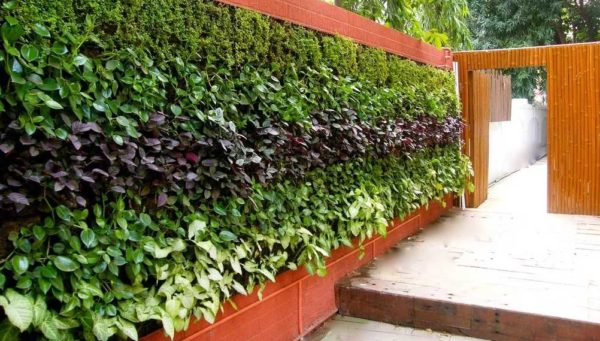 Садовые и дачные поделки: новинки (75 фото)