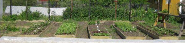Чтобы не полоть пространство между грядками, его можно засеять газонной травой. И красиво, и нет грязи
