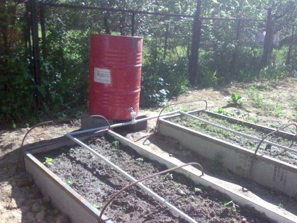 Самодельная система капельного полива из полимерных труб, источник воды - бочка