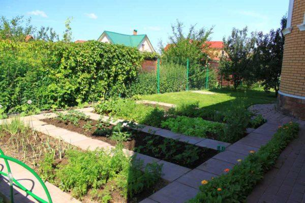 Обязательна защита земли от пересыхания (мульчирование) и защита от сорняков