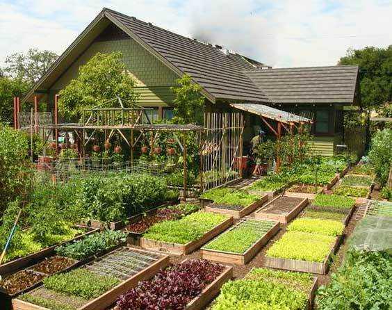Грядки с капризными растениями располагают как можно ближе к дому