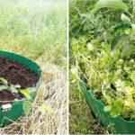 Для плодовых деревьев, растущих в заболоченных зонах можно сделать так