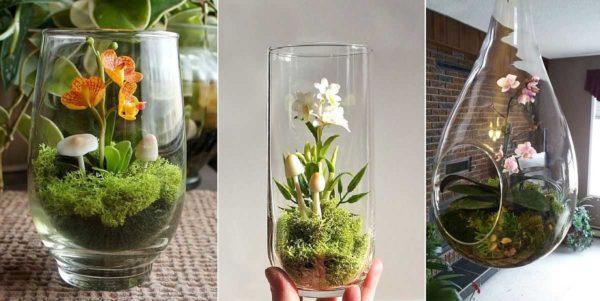 Фаленопсисы - идеальные кандидаты на выращивание в стакане или банке