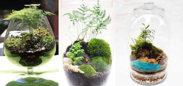 Это не папоротник, а растения, похожие на него