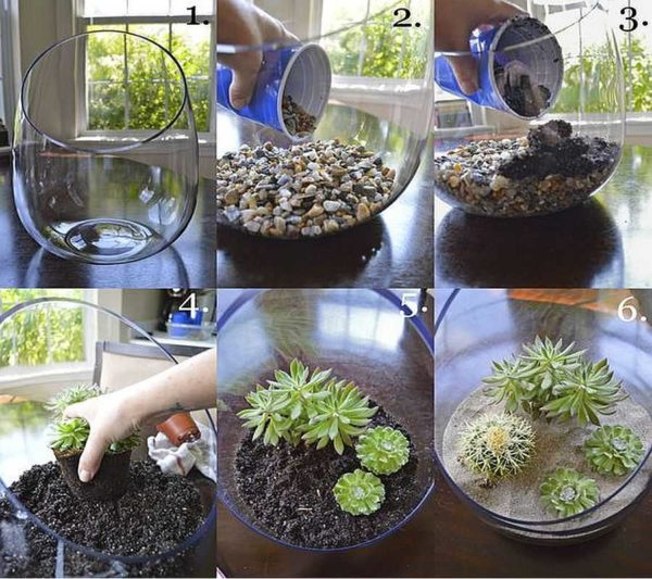 Первый флорариум своими руками попробуйте сделать из суккулентов и кактусов