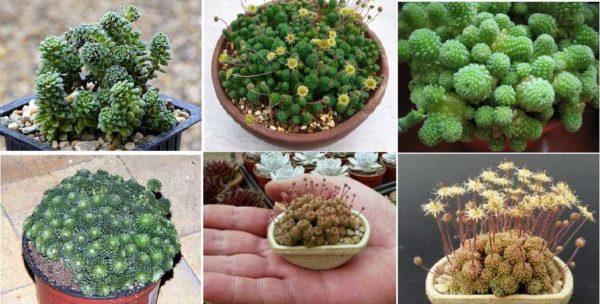 Небольшие по размеру подойдут для самых маленьких флорариумов