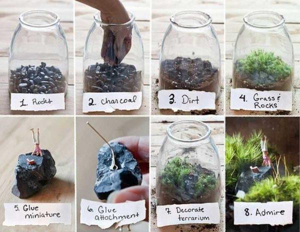 Один из вариантов высадки растений во флорариуме