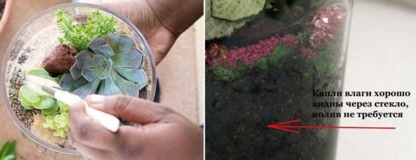 Секреты ухода за миниатюрным флорариумом