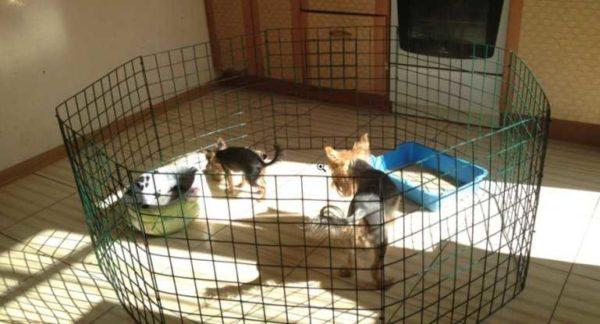 Это вольер (ограда) для маленьких собак