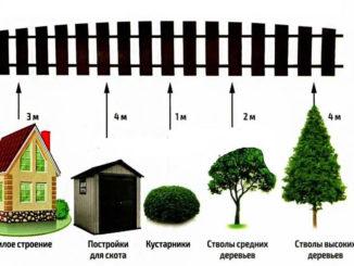 расстояние от деревьев до забора