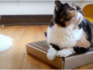 Полоски укладываем в коробку