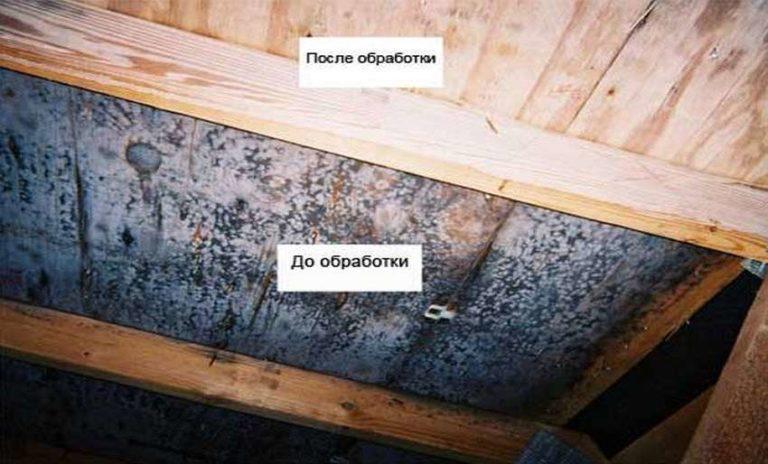 Поражение грибком деревянных перекрытий