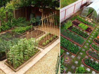 Сколько площади участка занять под огород зависит только от ваших желаний
