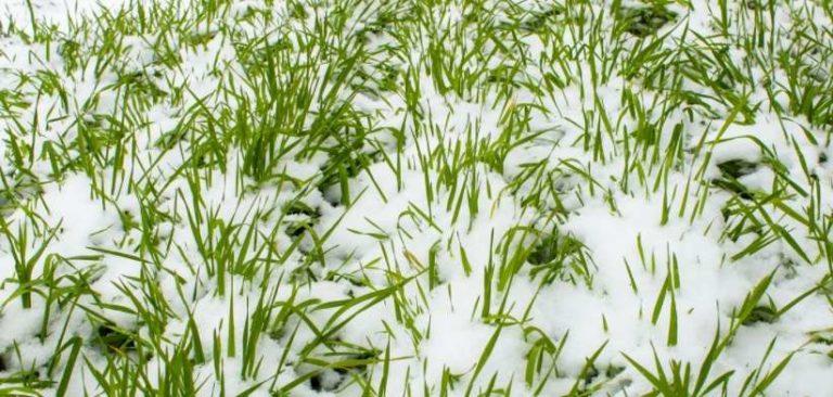 Правильно организовать огород - это еще и севооборот, и подготовка почвы