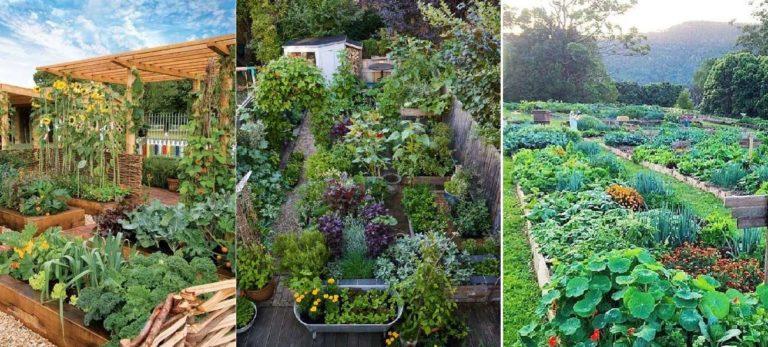 Планировка огорода под посадки - дело индивидуальное