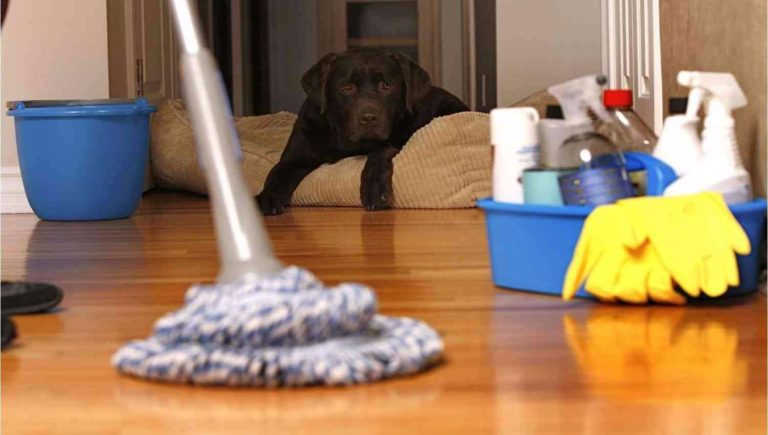Не всегда можно бесследно избавиться от следов мочи домашних животных
